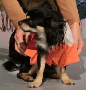 Hundemodenschau